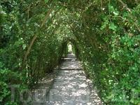 Романтический тоннель