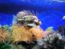 Питомец аквариума