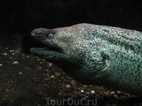 Моя десятилетняя 3-х мегапиксельная мыльница не сильна в темноте, но несколько фоток из аквариума все-таки выложу.
