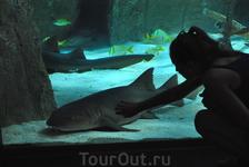 Это аквариум, который стоит посетить.