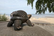 Очень популярная черепаха - звезда Юрмалы