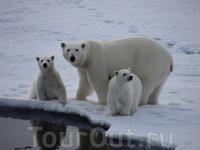 Встреча с семьей белых медведей, которые не побоялись подойти совсем близко к нашему ледоколу.