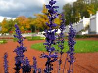 Парк Кадриорг. Золотая осень
