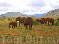 Вот ещё одно стадо слонов,они встречались чаще всего.
