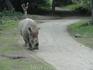 о. Бали. Сафари парк