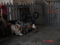 смешная чайка в порту