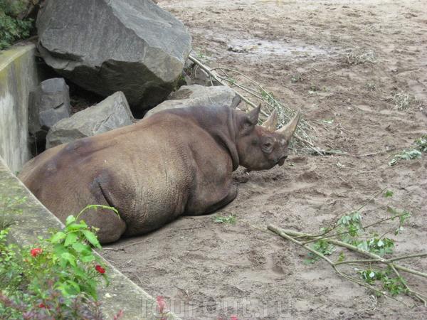 Носороги в тот день ленились и никого не развлекали