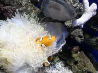 В океанариуме какая-то рыбка)