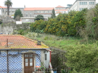Мандариновые рощи в центре Порту.