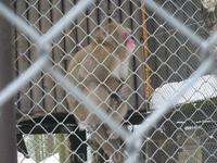 мини зоопарк,зимой обезьянки и попугаи,остальные ушли греться.