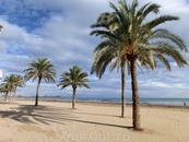 Моя мечта выглядела именно вот так - солнце, море и пальмы. Я ее, конечно, получила, но пришлось пару дней подождать :)