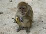 а потом пришел старший всех обезъянок прогнал и давай сам бананы лопать