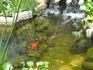 На территории церкви построен фонтан с семью кранами, в виде рыб (наверное по количеству источников в этом месте.) в котором в своё время плавают золотые ...