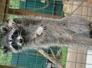 местный житель мини зоопарка