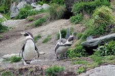 а ещё там живут пингвины! мои любимые пингвины... Атлантический парк Олесунда
