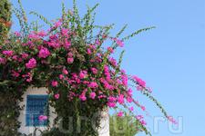 Яркие цветы дополняют красоту города