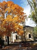 Многие деревья уже надели осенние наряды
