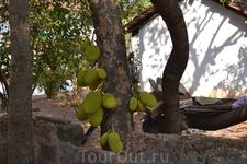 Фото 74 рассказа Индия. ГОА Арпора