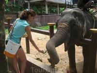 кормление бананами слона