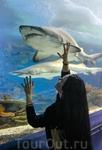 В океанариуме.. мечты сбываются, акулу я увидела! и не одну!