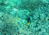 Панагасама, риф
