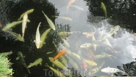 Рыбешки в пруде