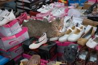 Кот продавец :)