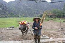 Товарищ приглашает сфотографироваться с ним и с его колоритной коровой.