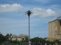 Ретранслятор, стилизованный под пальму.