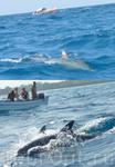 Прогулка на катере с дельфинами