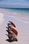 пляж Сирена - наши находки за пол часа гуляния вдоль дикого пляжа
