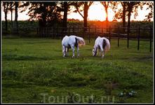 Две открытки в лучах заходящего солнца