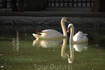 Лебеди в мини-зоопарке Батуми на бульваре