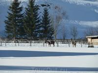альпийские лошадки