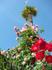 Розы, пальма, ну и как же без альбатроса :))