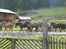 Утро...табун лошадей... и тишина....