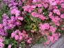 """Цветы везде цветы. Анютки """"затесались""""."""