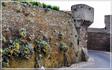 живая стена в Сен Мало (живность,растения.всякая плесень вековая...)
