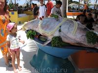 Ловили рыбаки отеля рыбку и словили рыбину такую)