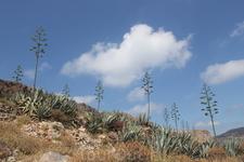 кактусы на острове Грамвуса
