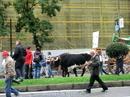 Понятно, что автомобилистов шествие раздражало, зато дети и туристы, типа меня, были в полном восторге.