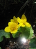 Цветы долины р. Орзагай
