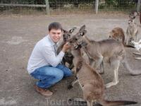 всюду кенгуру