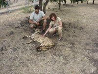Углаживание мурлыкающих гепардов