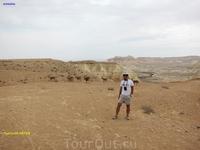 На фоне горных коз