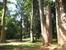 Дерево &quotСлоновая нога&quot - Королевский ботанический сад.