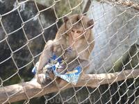 обезьянка, мечтающая о подарках