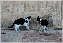 кошачьи РАЗБОРКИ в Куэнке...