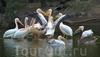 Фотография Национальный зоологический парк