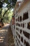 Фото 148 рассказа Индия. ГОА Арпора